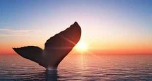 Отчет: Количество «китов» выросло на фоне недавнего ралли биткоина