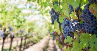 VeChain оцифрует французское вино через блокчейн