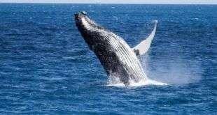 Биткоин-киты переместили $2 млрд за мизерную комиссию